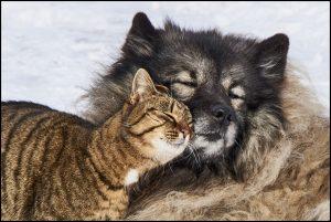 Happy Cat & Dog